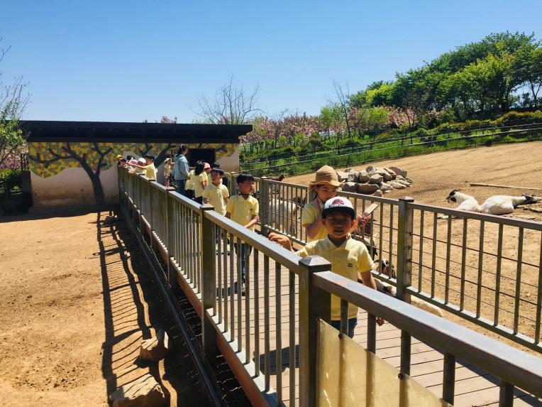 [1-2 현장체험]트랙터 동물원 (3).JPG