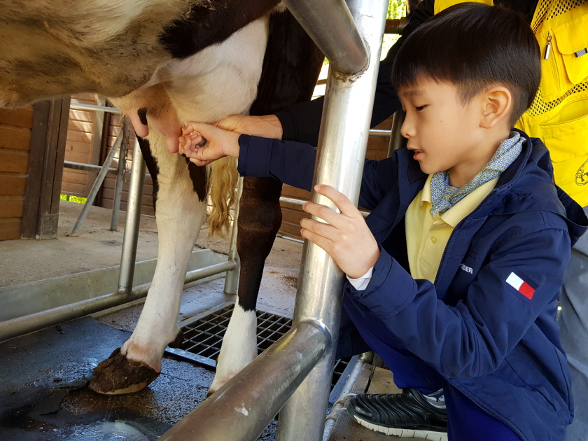 [1-2 현장체험]소젖짜기 (2).jpg